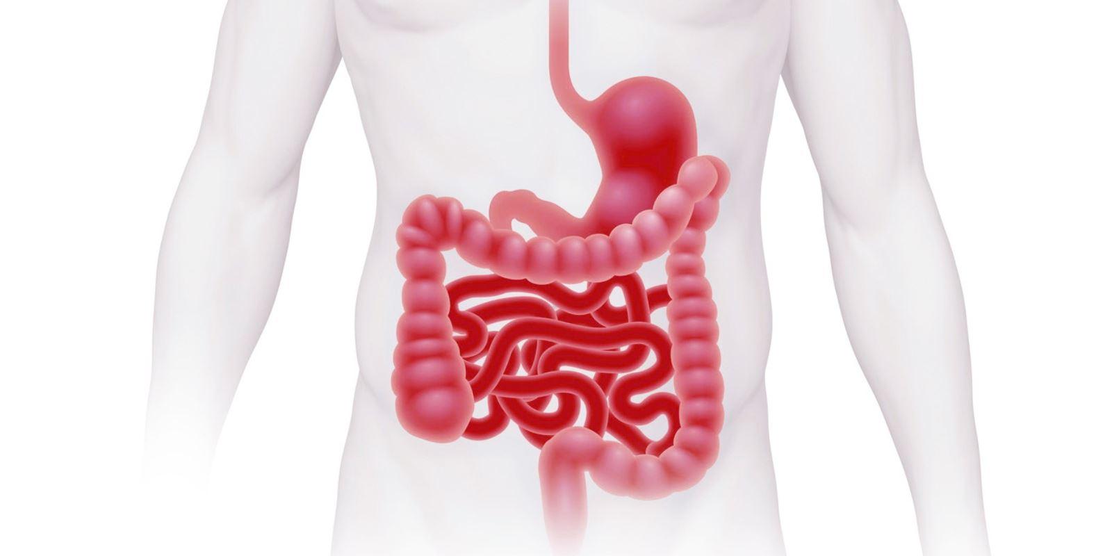 intestin5