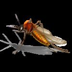 moustique4